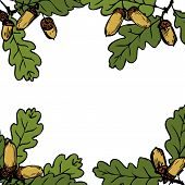 floral frame with line drawing oak branches with leaves and acorns, hand drawn vector illustration poster