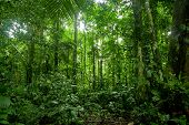 Tropical Rainforest Landscape, Amazon. See my other works in portfolio. poster