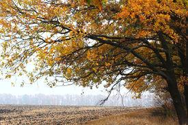Bright Oak Tree