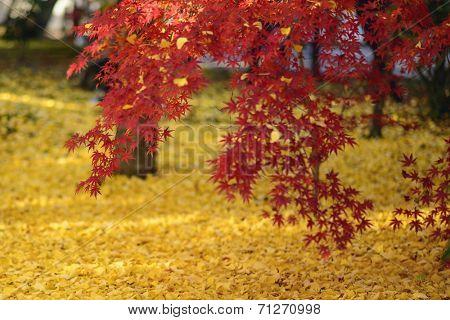 Fall foliage in Kyoto, Japan at Eikan-do Temple garden.