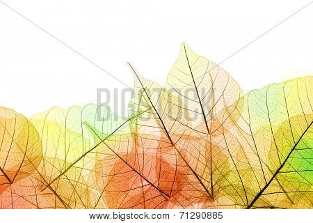 Border of Autumn color transparent Leaves - isolated on white background