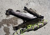 Four trout placed on concrete poster