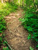 Sheltowee Trace trail in Red River Gorge, Kentucky. Daniel Boone National Forest poster