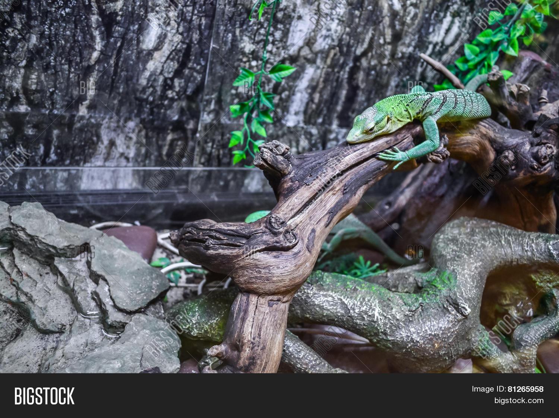 Green Lizard Terrarium Image Photo Free Trial Bigstock