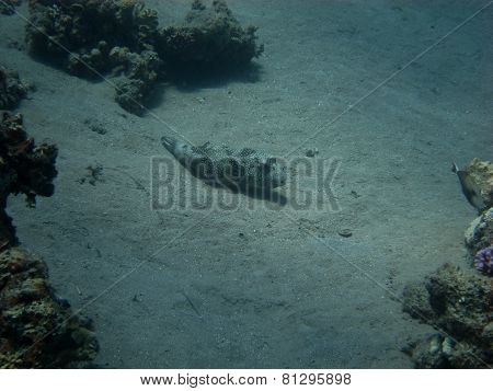 fish on the ocean ground