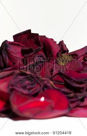 Wilting Closeup Of Red Rose Petals