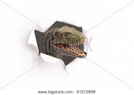 Dinosaur