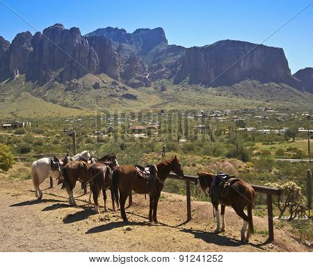 A Line Of Horses At A Hitching Post