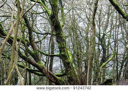 Trees in  woodland