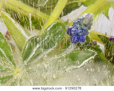 Blue Flowers And Beautiful Green Leaves In Ice