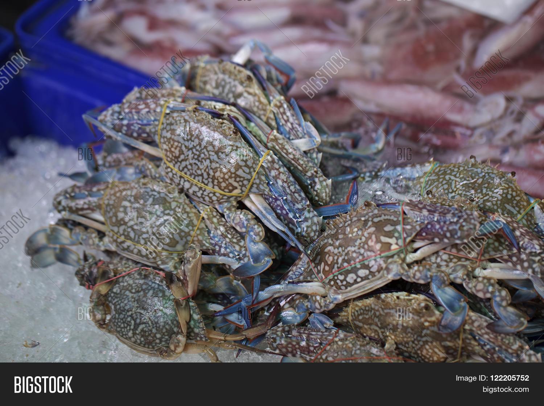 Fresh Horse Crab On Image & Photo (Free Trial) | Bigstock