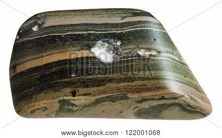Polished Marl Shale Mineral Gem Stone