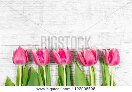 Tulips On Wood Background. Space For Text.