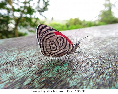 Close-up of a little butterfly on a wooden rail, with white, red and black wings pattern