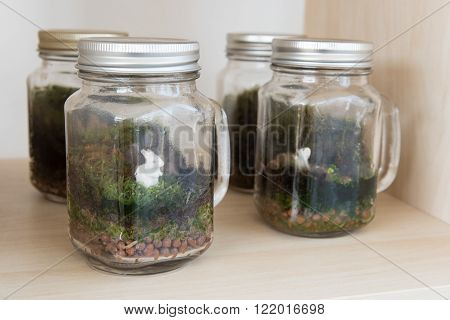 Terrarium Many little plants growth inside glass container for hobby and decorate house . Give for new year gift .