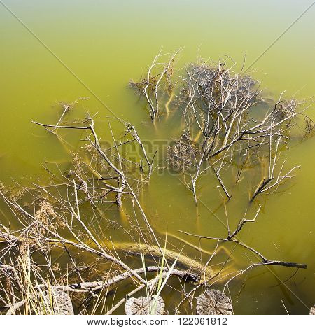 Stagnant water with dead branches of trees emerging on the surface