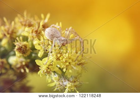 spider crawls on a meadow suffused with sunlight ** Note: Shallow depth of field