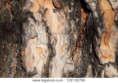 Larch bark background. Larch bark texture. Tree bark background. Bark background. Bark texture. Tree bark texture