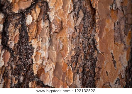 Red larch bark texture. Larch bark background. Larch bark texture. Tree bark background. Bark background. Bark texture. Tree bark texture