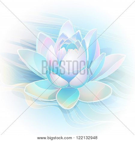 blooming water lily on a background of water