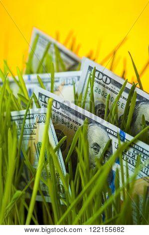 Money growth: one hundred dollar bills in green grass. Financial concept.
