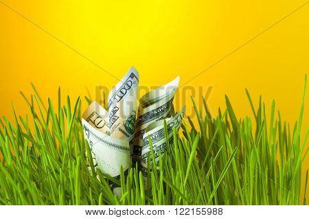 Investment growth: dollar bills in green grass. Financial concept.