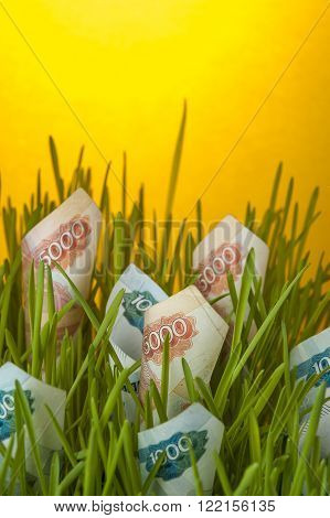 Ruble bills growing in green grass. Money growth. Appreciation of russian ruble. Financial concept.