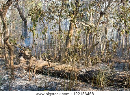 Wildfire in the forest in Chitwan, Nepal