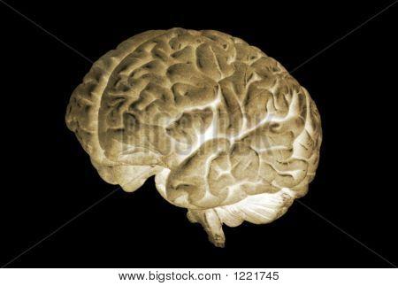 Brain Model Negative