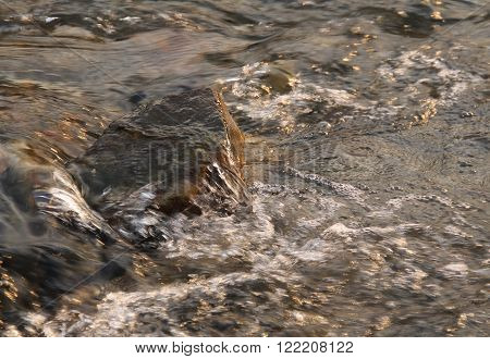 close photo of a stone in the stream of bubbling river