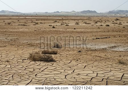 Dry cracked soil and plant in desert