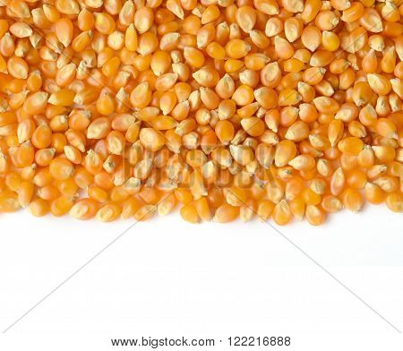 Corn Grains Close Up