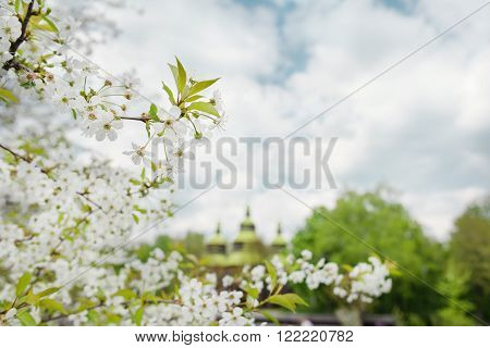wooden chirch and trees in bloom in outdoor ukrainian national falk historical village in Kiev