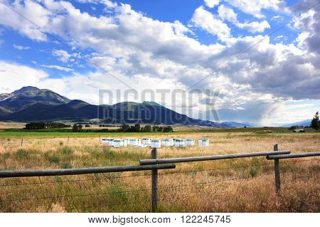 Rainstorm sweeps across Paradise Valley in Montana. Beehive boxes sit in cluster in open field. Absaroka Mountains fill in background.