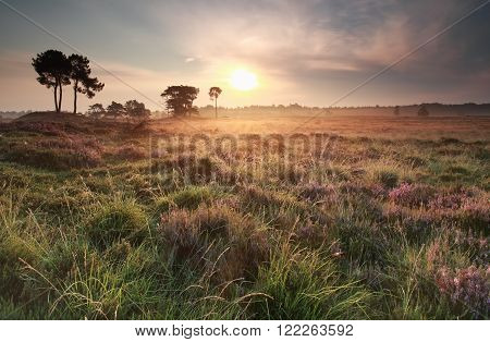 summer gold sunrise over meadow Drenthe Netherlands