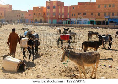 Donkeys In Rissani, Morocco