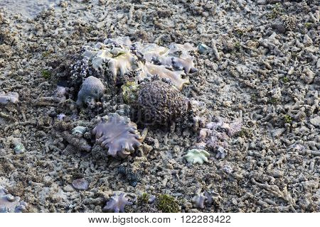 Coral reef in low tide in Indonesia poster