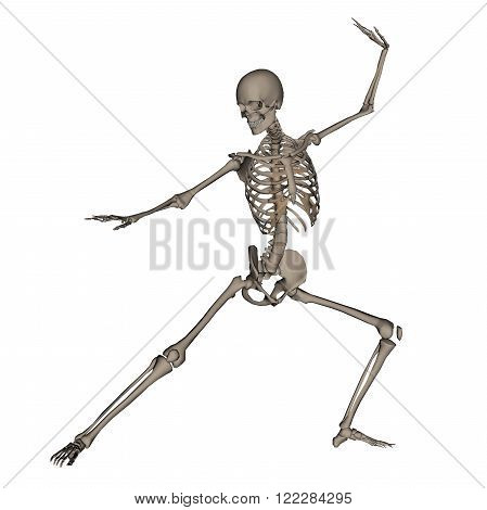 Frontview of human skeleton ready to fight isolated in white background - 3D render