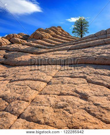 White Pocket rock formations, Vermilion Cliffs National Monument, Arizona, USA