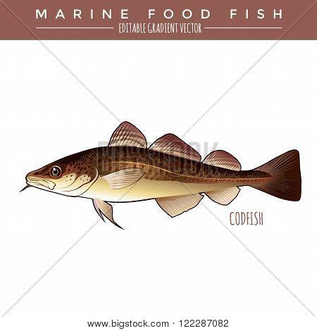 Codfish. Marine food fish, editable gradient vector