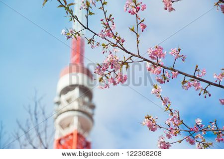 Pink Sakura And Tokyo Tower Is Background