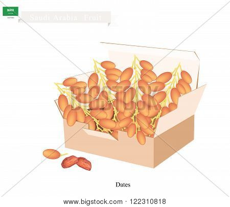 Saudi Arabia Fruit, Illustration of Dried Dates. The Most Popular Fruits of Arabian Peninsula.