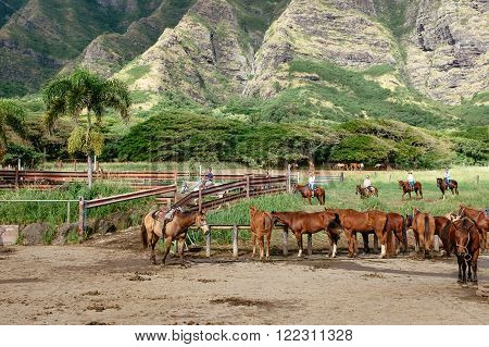 HAWAII UNITED STATES - DECEMBER 2015: Tourist horse riding at Kualoa Ranch on Oahu island of Hawaii on December 2015 in Hawaii United States. The Kualoa Ranch is the popular place for tourists and filmmakers - Jurassic Park Lost World.