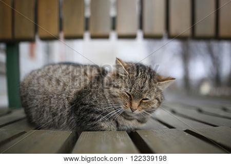 Reposing cat. comfortable, blue, kitten, sitting, face ** Note: Shallow depth of field