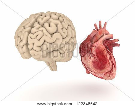 Realistic human brain and heart isolated on white background.