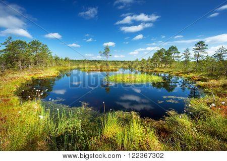 Viru bogs at Lahemaa national park in summer