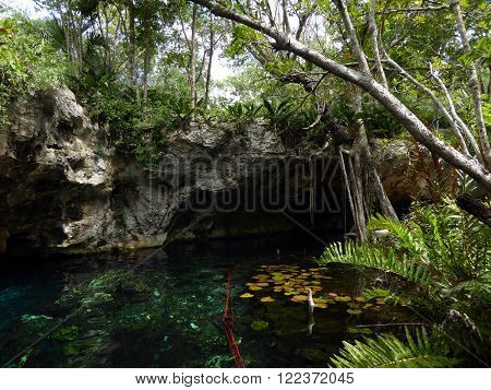 The clear azure waters of the Gran Cenote a limestone sinkhole near the city of Tulum in the Yucatán peninsula of Mexico.