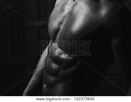 Closeup Of Beautiful Male Body