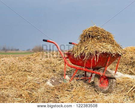 Wheelbarrow with natural cattle manure on the farmland