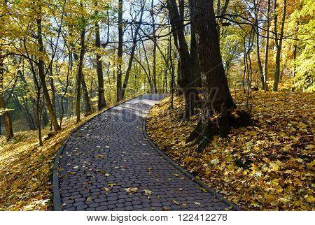 Stony Pathway In Autumn Park.